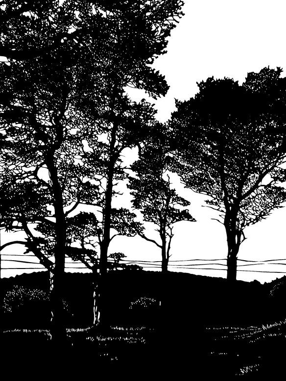 arnside trees