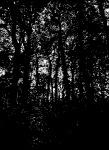 deep in silverdale woods