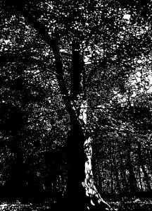 silverdale-tree