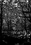 clougha-woods