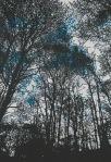 littledale-tree-print-coloured